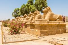 A entrada a Karnak é através de uma avenida prolongada da ram - esfinges dirigidas fotografia de stock royalty free