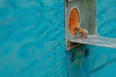 Entrada y abeja de la colmena Fotos de archivo libres de regalías