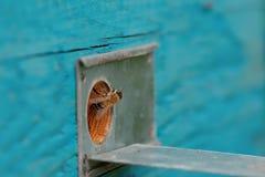 Entrada y abeja de la colmena Imagen de archivo