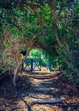 Entrance through the alley of trees. Entrance through the trees alley arch to the back yard with colt Stock Photo
