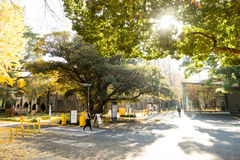 Entrance At Tokyo University Under Big Trees And Sunlight Foliage. Royalty Free Stock Images