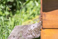 Beehive and bees Stock Photo