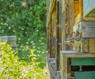 Beehive and bees. Entrance of a beehive with lots of bees in sunny ambiance Royalty Free Stock Photo