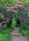Entrance Craggy Garden Pinnacle Trail North Carolina Stock Photo