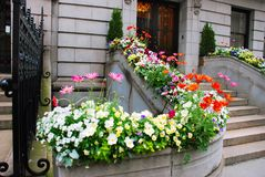 Entrance door and flowers. Front stairs of old stone building surrounded by flowers Stock Image