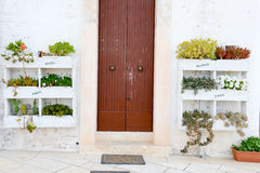 Entrance door of a house decorated with cactus plants Stock Photo