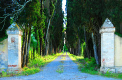 Entrance Gate. To an old villa in Tuscany. Old cypress trees flank the road. Traditional architecture for this area Stock Photography