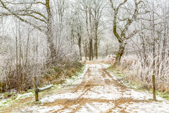 Entrance gate to a frosty forest lane Stock Photography