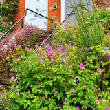 Entrance with geranium plants in London Royalty Free Stock Photography
