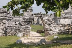 Entrance to the castle of Tulum, Mexico. This entrance made of stones, to the castle of tulum and a tree as an adornment, shows the beauty of the place. To enter stock photography