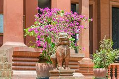 Entrance in the National Museum of Cambodia in Phnom Penh with guardian lion statues at the steps. Decorated with Bougainvillea and other plants royalty free stock images