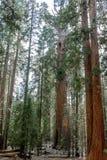 entrance nationalparksequoiaen Fotografering för Bildbyråer