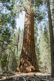 entrance nationalparksequoiaen Royaltyfri Bild