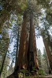 entrance nationalparksequoiaen Arkivfoton