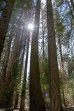 entrance nationalparksequoiaen Royaltyfri Foto