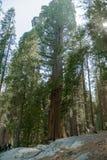 entrance nationalparksequoiaen Royaltyfri Fotografi