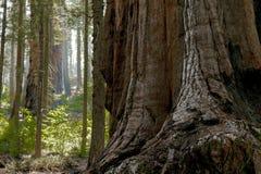 entrance nationalparksequoiaen Arkivbilder