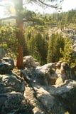 entrance nationalparksequoiaen Royaltyfria Bilder