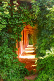 Entrance, overgrown lianes Stock Photos