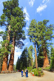 At the entrance of sequoia forest national park, USA Royalty Free Stock Photos