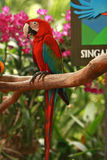 Entrance of the Singapore Bird Park. One of beautiful red Macaw stand at entrance of the  Singapore Bird Park for welcome Stock Photos