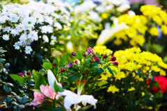 Entrance into a small flower shop. Fresh flowers. Royalty Free Stock Image