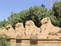 Entrance statues in Karnak temple (Egypt). Statues of lions with goat head in the temple of Karnak in Egypt Royalty Free Stock Images