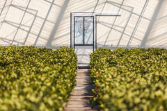 Entrance of a sunny greenhouse Stock Photography