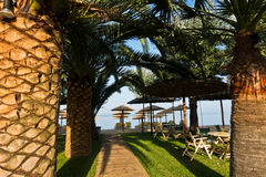 Entrance to the beach through palm trees alley. Sithonia, Greece Royalty Free Stock Image