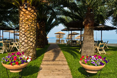 Entrance to the beach through palm trees alley, Sithonia. Greece Royalty Free Stock Photos