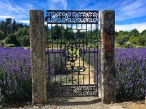 Entrance to blooming lavender garden stock photography
