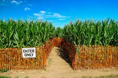 Corn Maze Stock Photos
