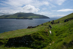 Entrance to Dingle Bay. On the right is the entrance to Dingle Bay, in western Ireland. The photograph was taken from the abandoned village on Great Blasket royalty free stock photography