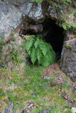 Entrance to disused lead mine, like cave, with fern. Royalty Free Stock Photo