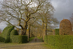 Entrance to a fancy garden with lane of oak trees and trimmed hedges Royalty Free Stock Images