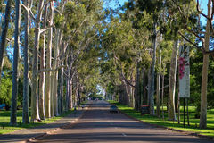 Entrance to Kings Park in Perth. Tree lined entrance to Kings Park in Perth, Western Australia Royalty Free Stock Image