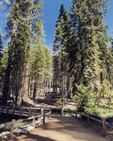 Entrance to Mariposa Grove of Giant Sequoias. Sequoia Redwood Trees at royalty free stock photos