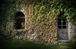 Entrance to an Old Building Ivied by Ivy Royalty Free Stock Photography