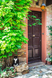 Entrance to the old Italian house and the cat Royalty Free Stock Photos