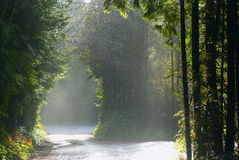 Entrance to the Pacific Rim rainforest. With dispersed sunshine Royalty Free Stock Photography