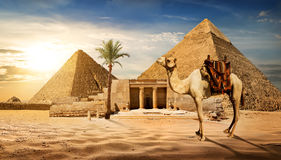 Entrance to pyramid. Camel near entrance to pyramid of Cheops stock photo