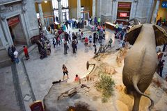 Entrance to the Smithsonian Natural History Museum royalty free stock images