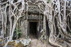 The entrance to the temple in the jungle. Streaked with roots Stock Image