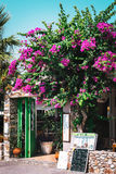 Entrance to traditional Greek tavern decorated with beautiful bougainvillea flowers. Stock Image