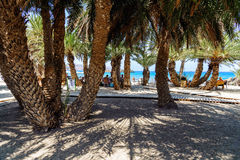 Entrance to Vai beach with grren palms and sandy beach. Stock Image