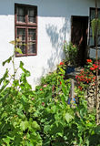 Entrance to the village house with vines and flowers Royalty Free Stock Photos