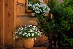 Entrance to a wooden house decorated with flowers stock photography