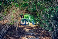 Entrance through the alley of trees. Entrance through the trees alley arch to the back yard with colt Stock Photography
