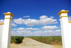 Entrance of vineyard. Royalty Free Stock Image