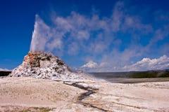 Entrando em erupção o geyser Fotografia de Stock